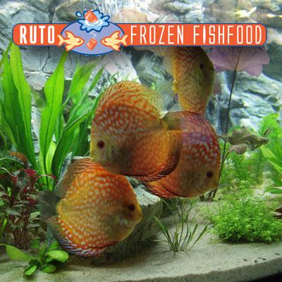 Thumbnail: 1e plaats RUTO aquarium wedstrijd 2011