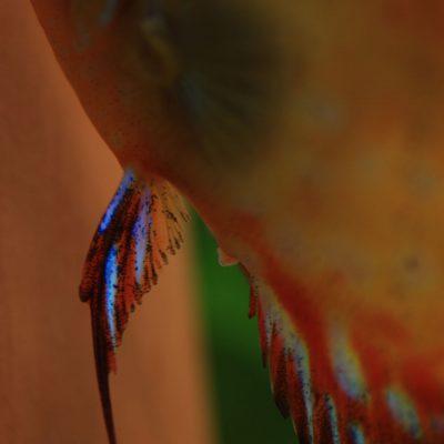 Stendker - Pigeon Blood Red legbuis met eitje