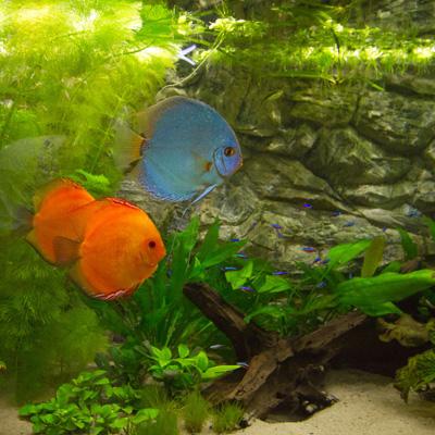 Thumbnail: Mijn show aquarium