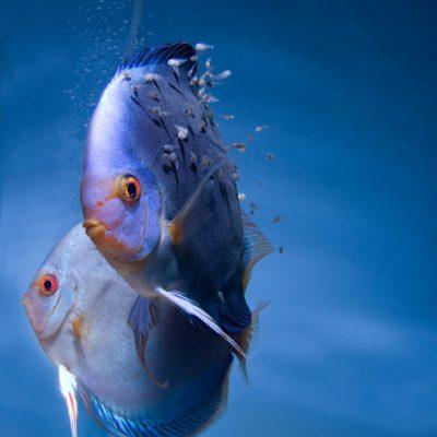 Aquarium fotografie voorbeeld foto: Het onderwerp is links gecentreerd