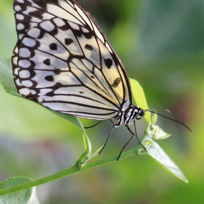 Aquarium fotografie voorbeeld foto: Vlinder als oefenmateriaal