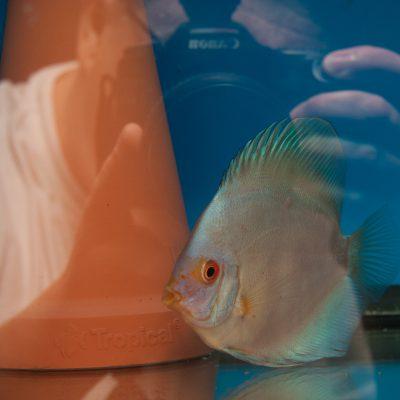 Aquarium fotografie voorbeeld foto: Reflectie door lichtbron.
