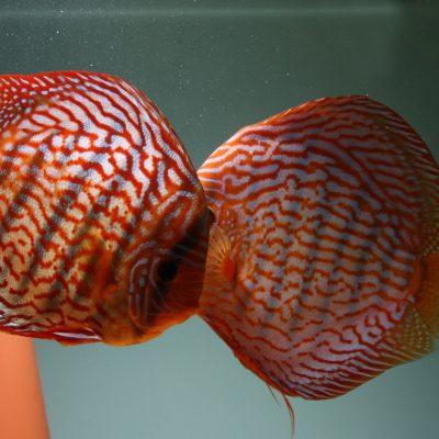 Aquarium fotografie voorbeeld foto: Reflectie van zweefvuil of visvoer.