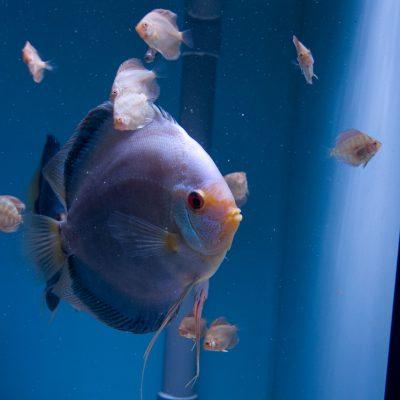 Aquarium fotografie voorbeeld foto: Horizon staat niet horizontaal