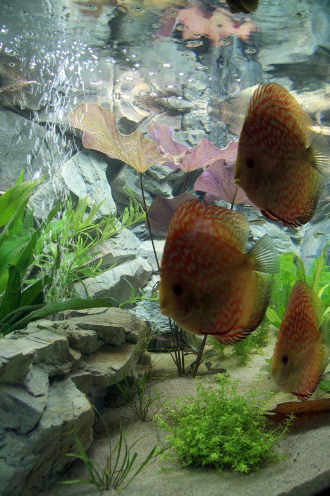 Aquarium fotografie voorbeeld foto: Het onderwerp is slecht belicht!