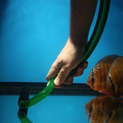 Aquarium fotografie voorbeeld foto: Schaduw werking. is spelen met licht