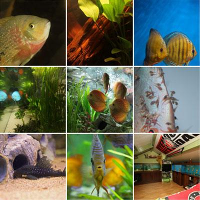 Thumbnail: Hogere resolutie foto's – deel 4
