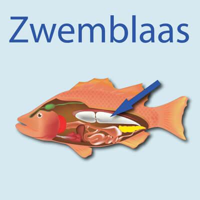 Thumbnail: Zwembaas problemen – kopstaander!