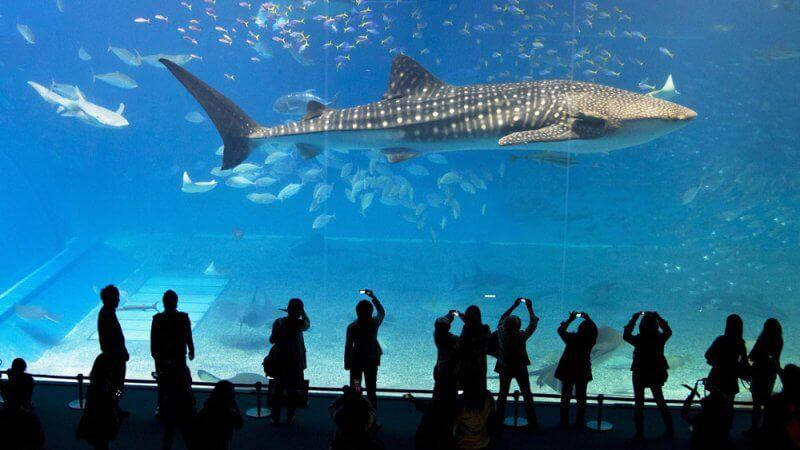 Afbeelding: groot aquarium