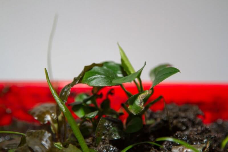 Afbeelding: hestellende waterplanten