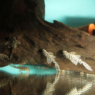 Afbeelding: Aquarium van de bouwmarkt