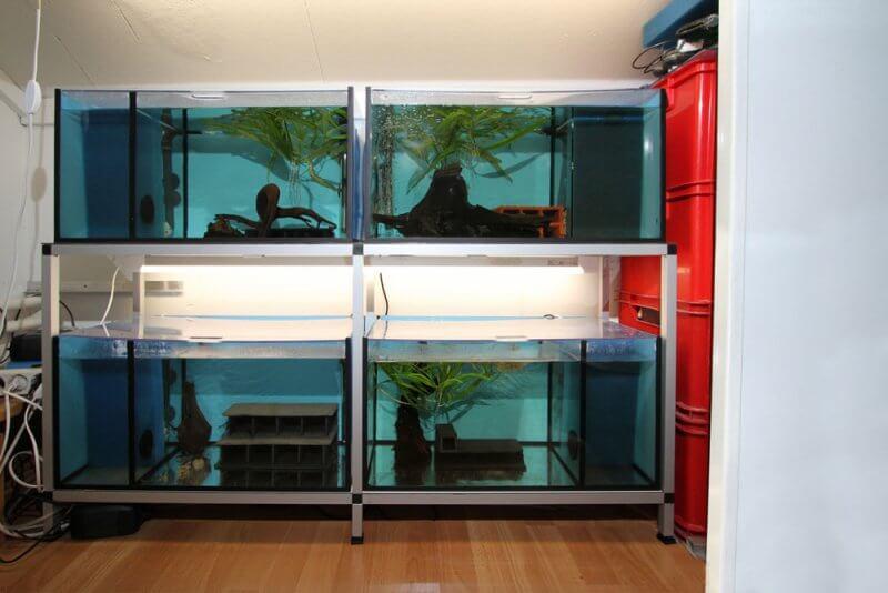 Afbeelding: aquariumstelling
