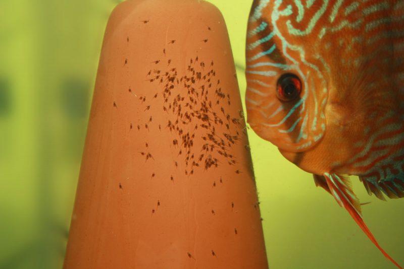 Afbeelding: Ceramische afzetkegel met larfjes