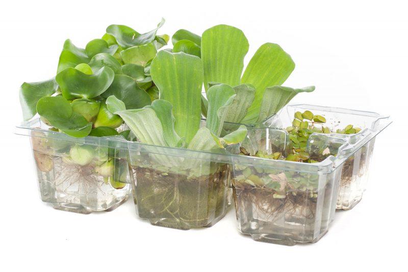 Afbeelding: drijfplanten assortiment