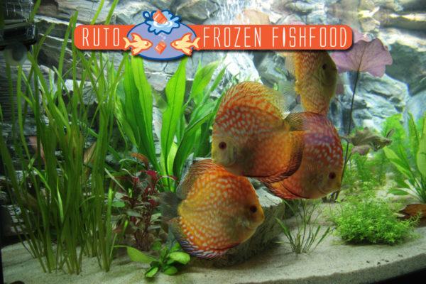 1e plaats RUTO aquarium wedstrijd 2011