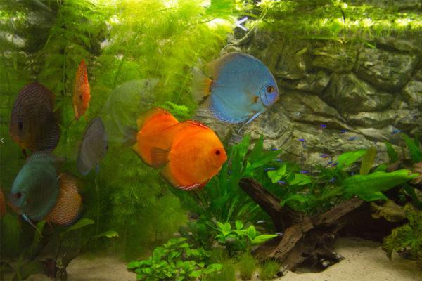 Fotoalbum mijn aquarium 2011