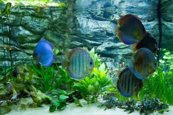 Fotoalbum mijn aquarium 2012