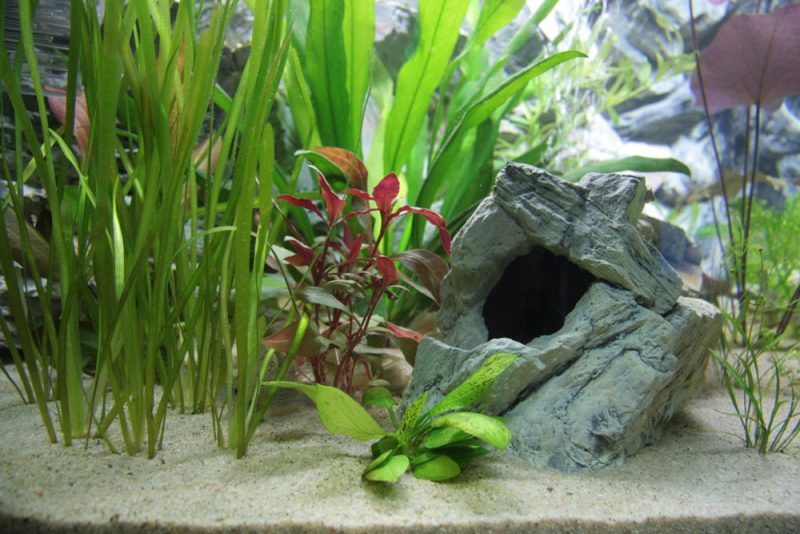 Een beplante aquarium