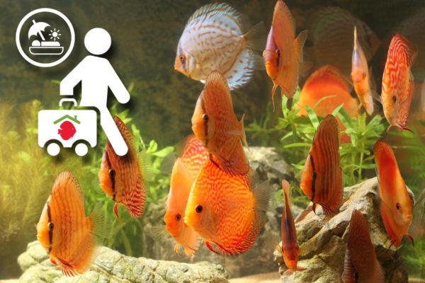 Aquarium met vakantie
