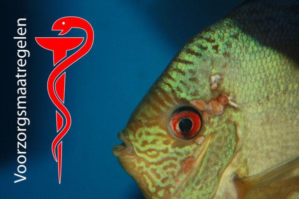 Algemene voorzorgmaatregelen bij medicatie toediening in het aquarium
