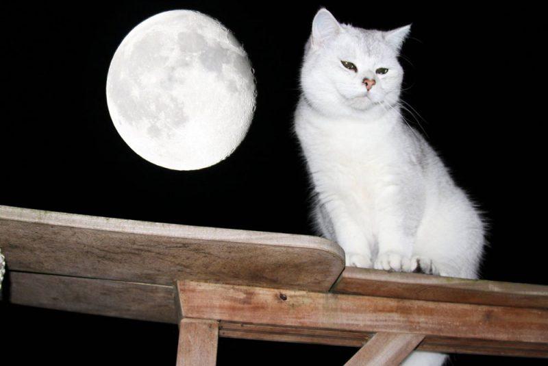 De maan geeft echt geen blauwe of rode gloed af.