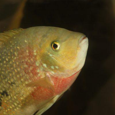Aquarium fotografie voorbeeld foto: Titel pagina foto