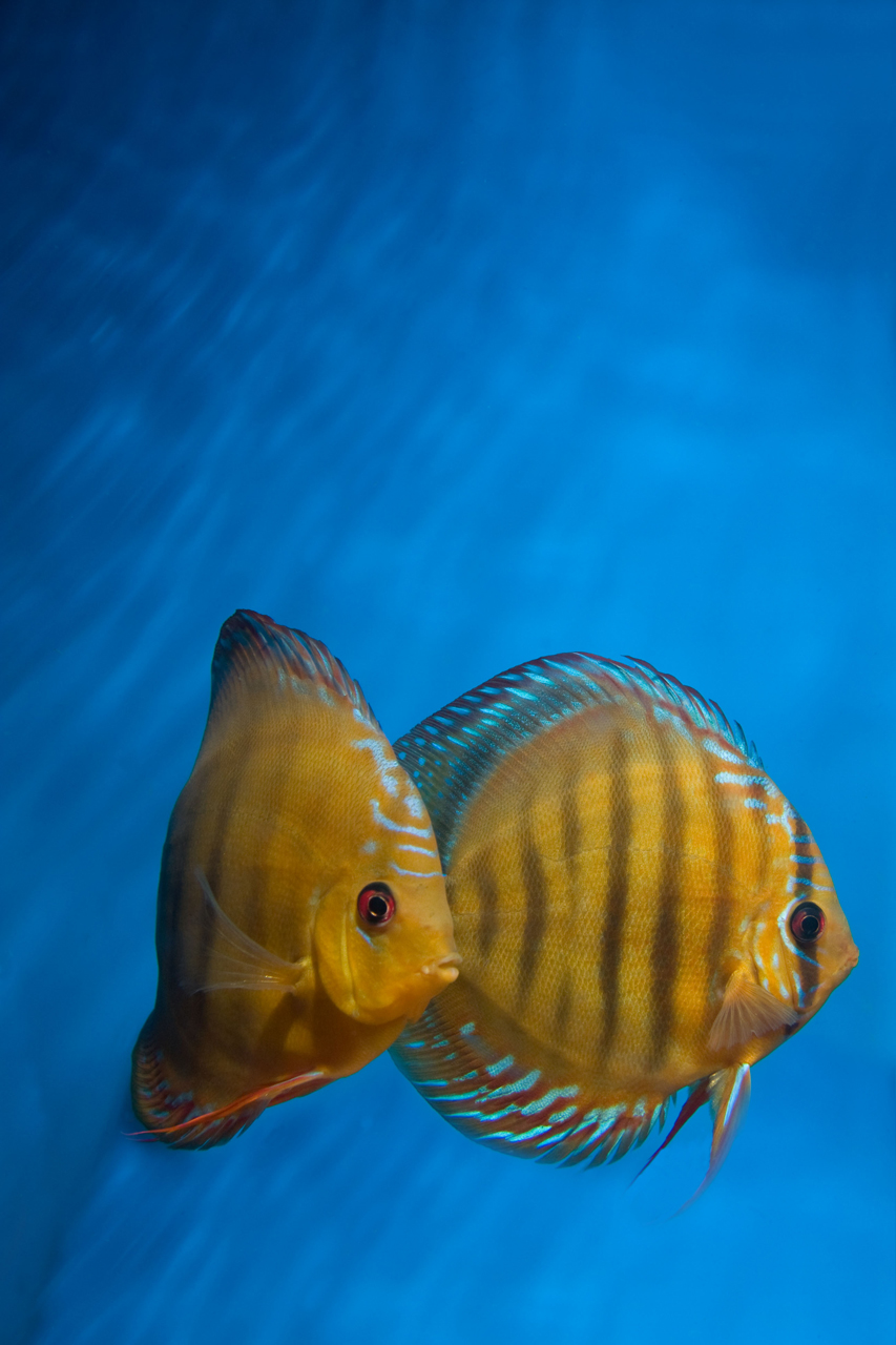 Aquarium fotografie voorbeeld foto: Positie onder aan het scherm.