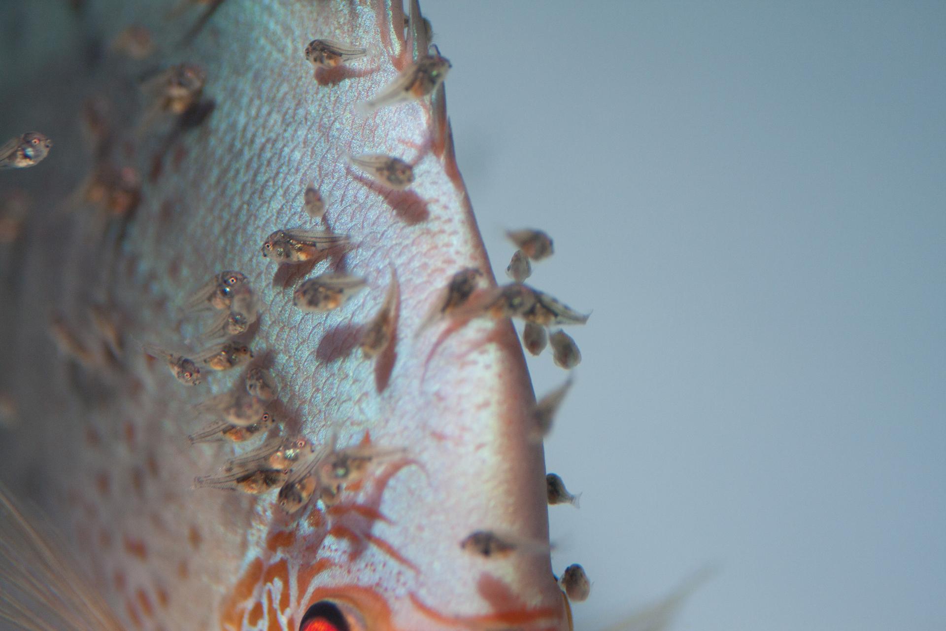 Aquarium fotografie voorbeeld foto: Macrolens opnamen met beperkte scherpte diepte