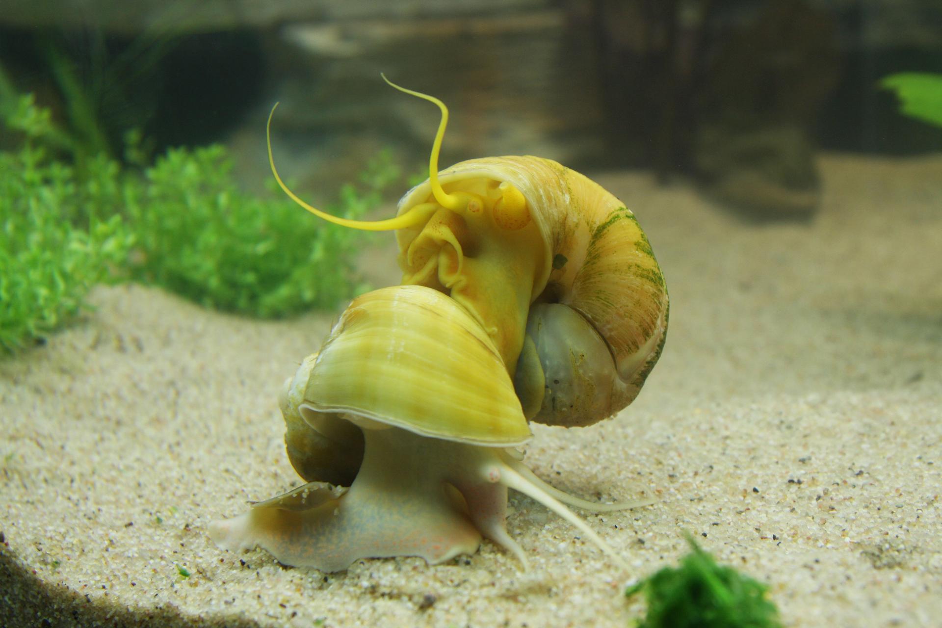 Aquarium fotografie voorbeeld foto: Bij een beperkte scherpte, diepte komt het onderwerp beter tot zijn recht.