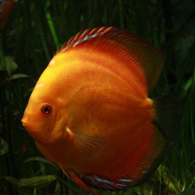 Aquarium fotografie voorbeeld foto: Foto onderbelicht