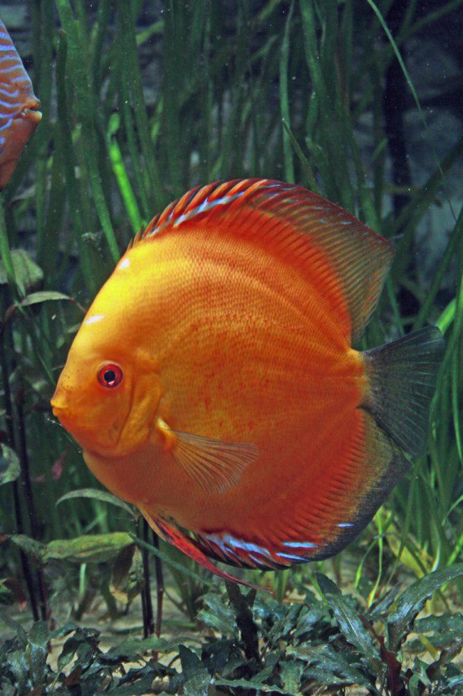 Aquarium fotografie voorbeeld foto: Foto met de juiste belichting.