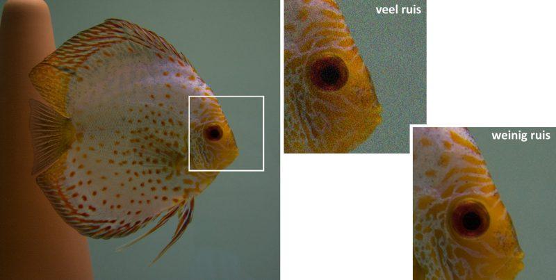 Aquarium fotografie voorbeeld foto: Meer beeldruis bij hogere ISO waarden
