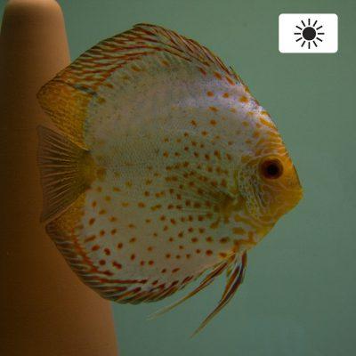 Aquarium fotografie voorbeeld foto met witbalans: Daglicht