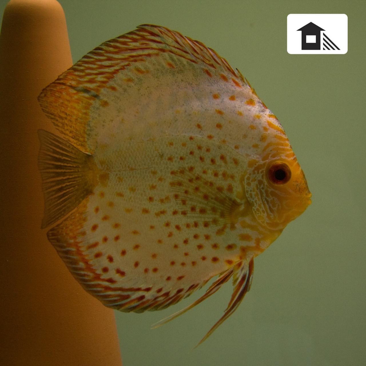 Aquarium fotografie voorbeeld foto met witbalans: Schaduw