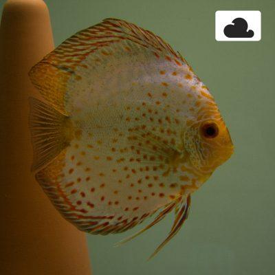 Aquarium fotografie voorbeeld foto met witbalans: Bewolkt