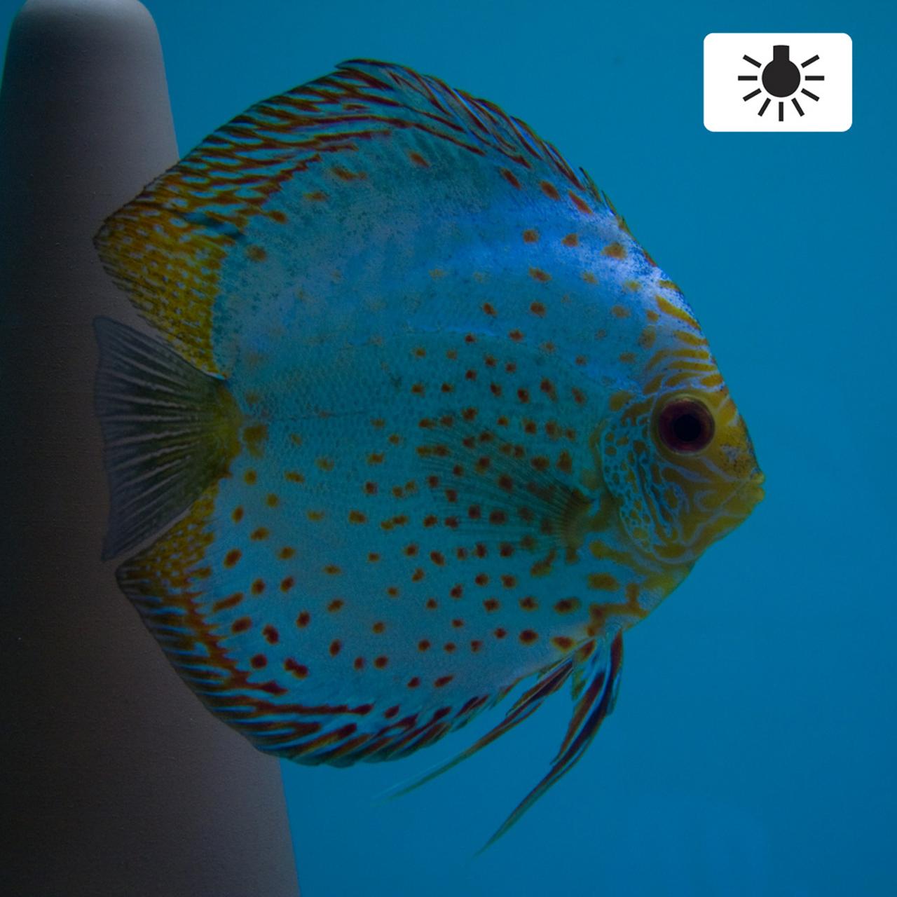 Aquarium fotografie voorbeeld foto met witbalans: Kunstlicht