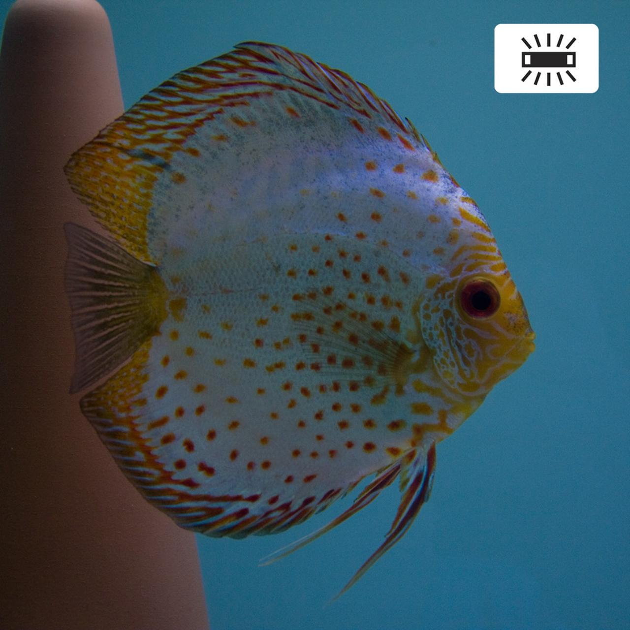 Aquarium fotografie voorbeeld foto met witbalans: Wit Tl-licht