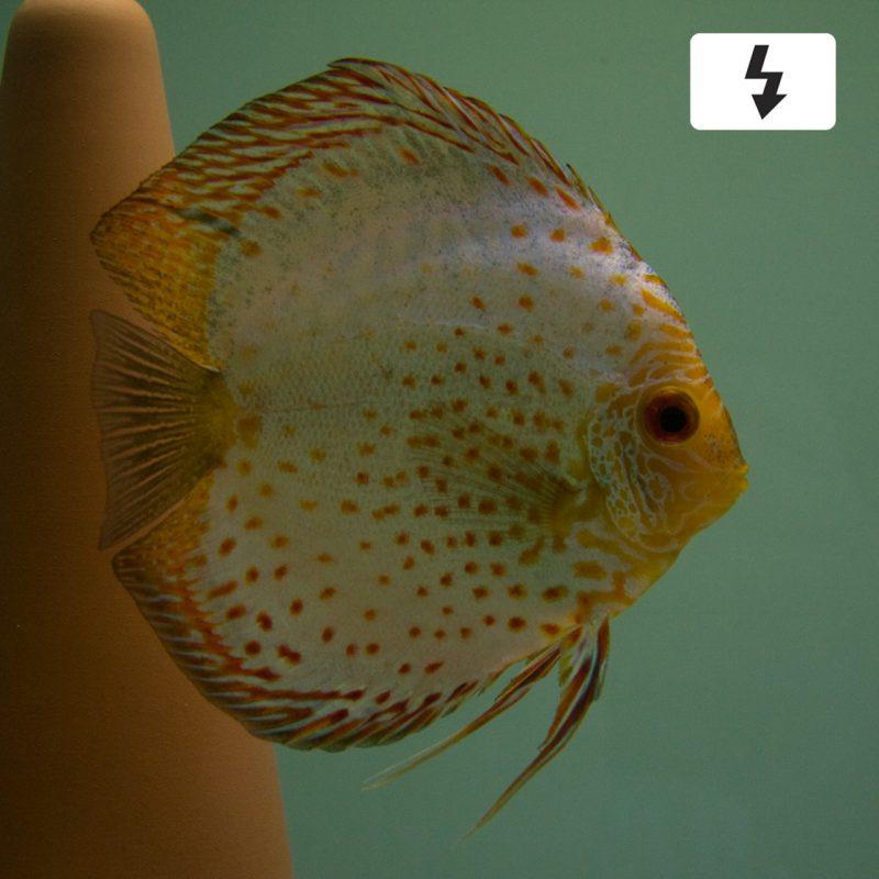 Aquarium fotografie voorbeeld foto met witbalans: Flitser