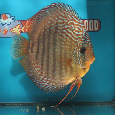 Aquarium fotografie voorbeeld foto: Het onderwerp staat in het midden van het beeld