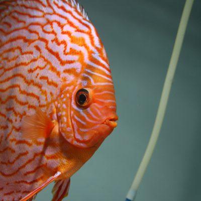 Aquarium fotografie voorbeeld foto: Profielfoto de luchttoevoer is uitgezet