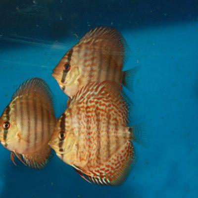 Aquarium fotografie voorbeeld foto: Reflectie van vuil glas.