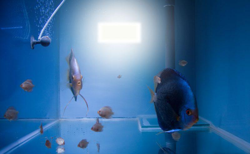 Aquarium fotografie voorbeeld foto: Reflectie van flitser.