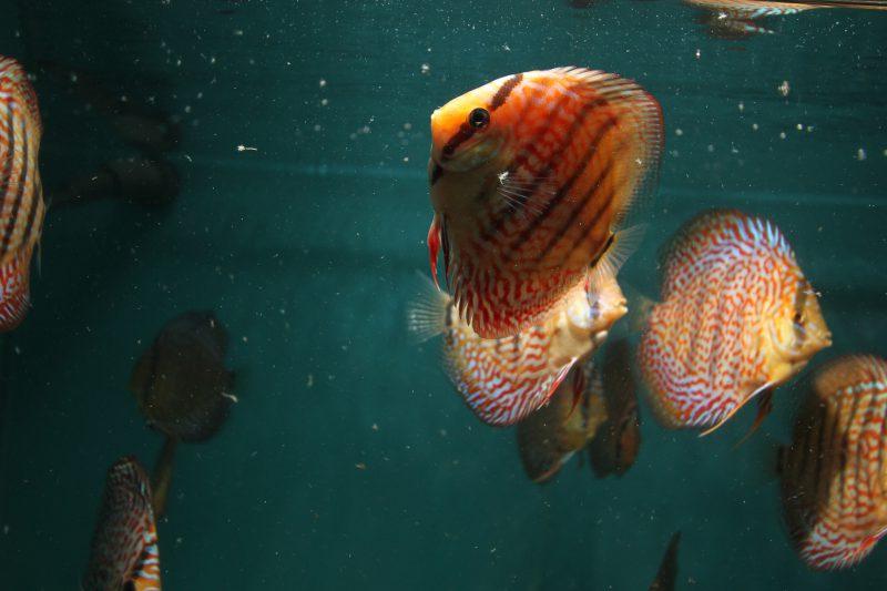 Aquarium fotografie voorbeeld foto: Het halo effect.