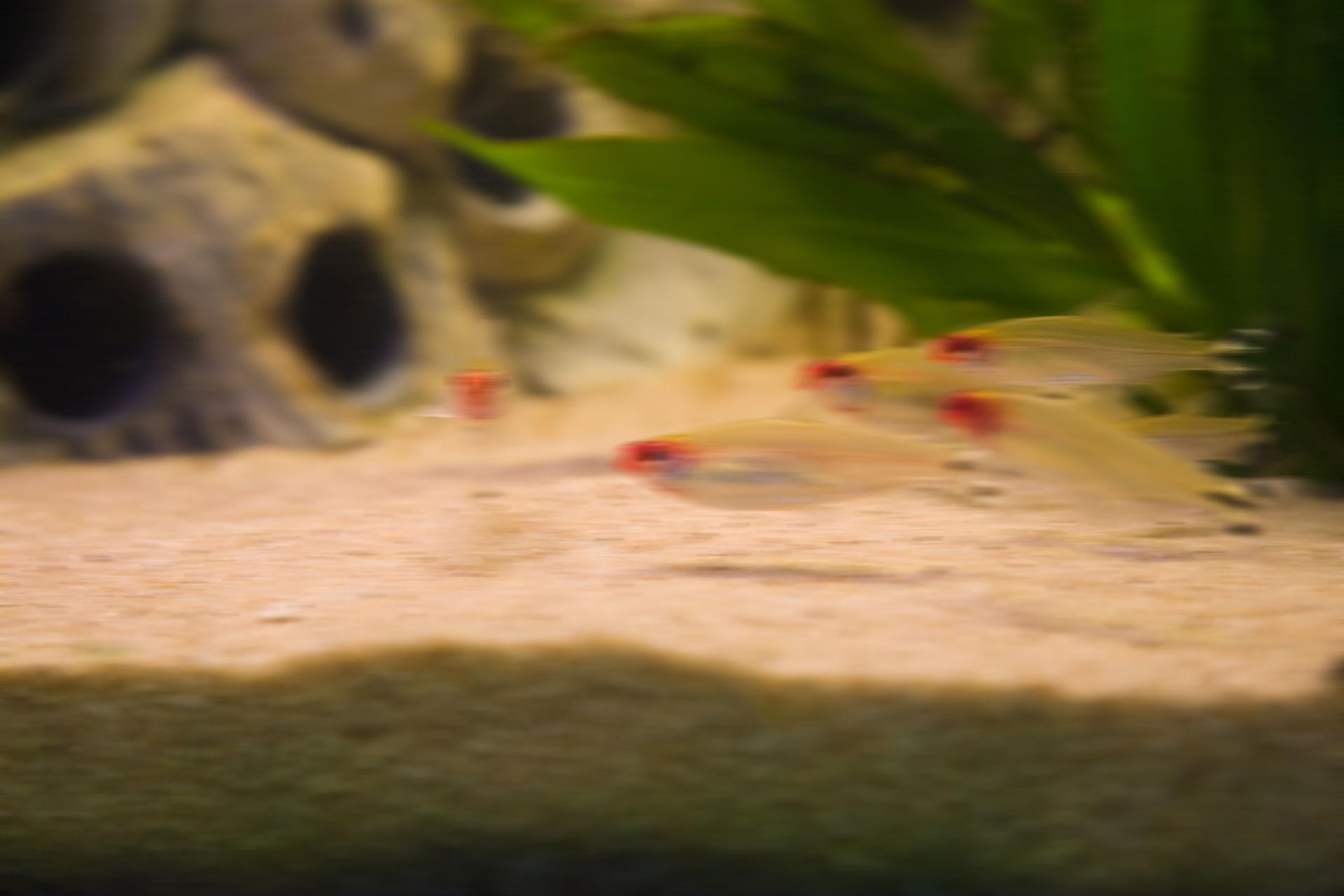 Aquarium fotografie voorbeeld foto: Bewegingsonscherpte veroorzaakt door de het bewegen van camera.