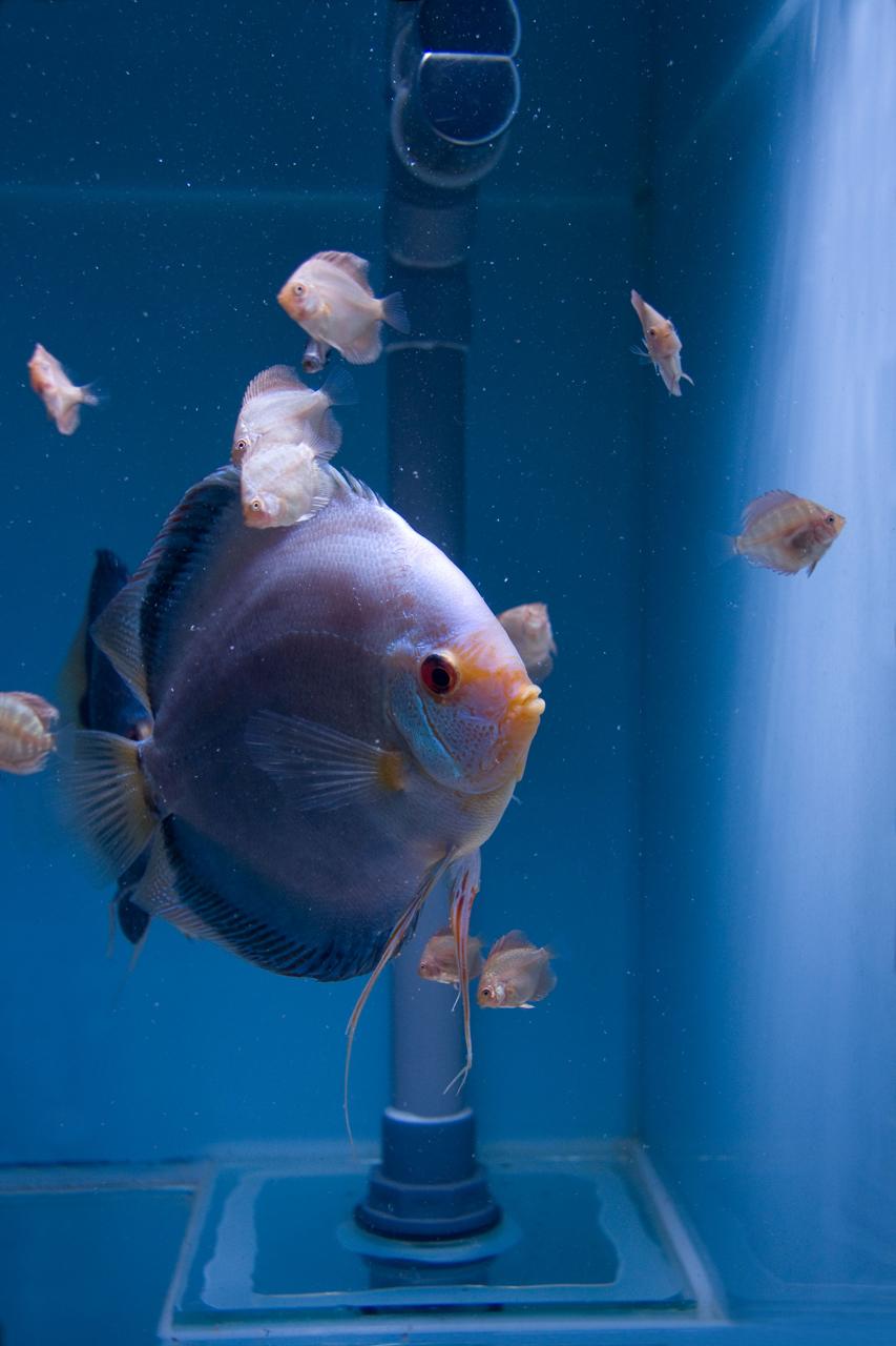 Aquarium fotografie voorbeeld foto: Horizon is recht gezet met software.
