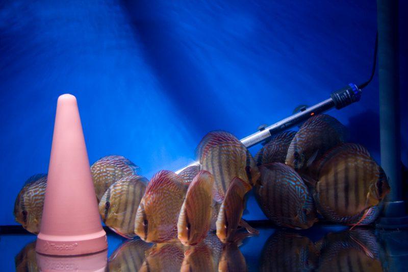 Aquarium fotografie voorbeeld foto: Schaduwwerking, is spelen met licht.