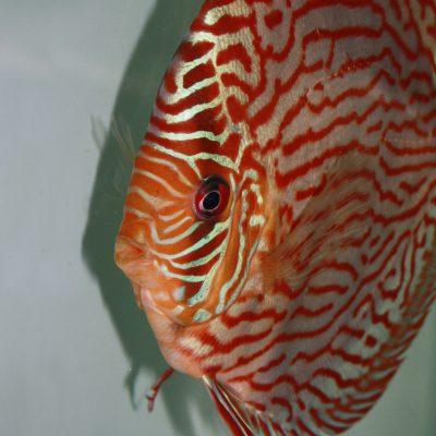 Aquarium fotografie voorbeeld foto: Harde schaduwlijnen zijn meestal ongewenst