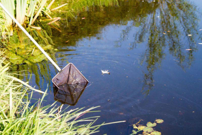 Watervlooien vangen met een watervlo netje