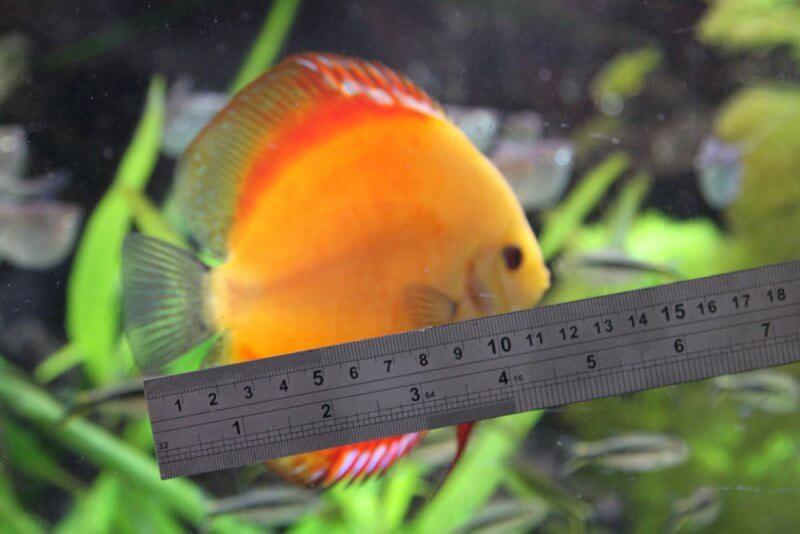 Afbeelding: totale lengte meten met een liniaal