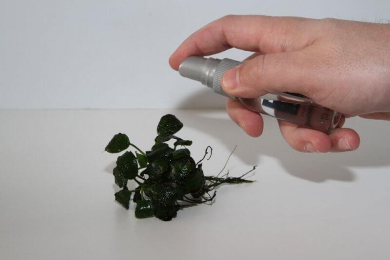 Afbeelding: Plant inspuiten met waterstofperoxide